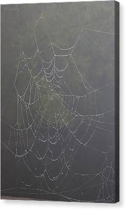Spiderweb Canvas Print by Allan Morrison