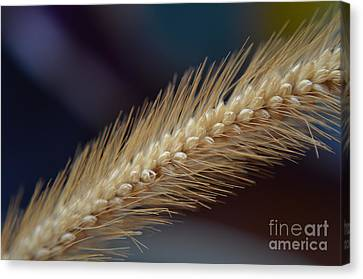 Canvas Print featuring the photograph Spike by Michelle Meenawong