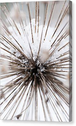 Spikes And Ice Canvas Print by Anne Gilbert