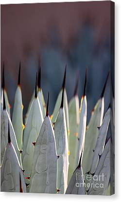 Spikes Canvas Print by Ruth Jolly