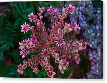Spiky Flowers Canvas Print by Omaste Witkowski