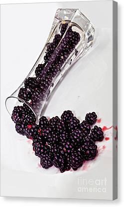 Spilt Blackberries Canvas Print