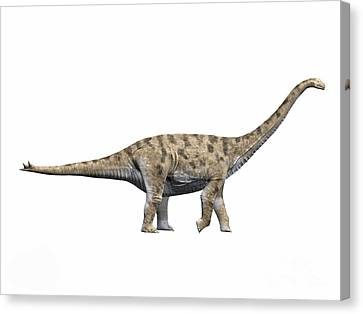 Spinophorosaurus Nigerensis, Middle Canvas Print by Nobumichi Tamura