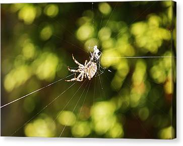 Canvas Print featuring the photograph Spins A Web by Al Fritz