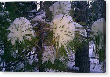 Canvas Print featuring the photograph Spiny Snow Balls by Chris Tarpening