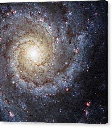 Spiral Galaxy M74 Canvas Print by Adam Romanowicz