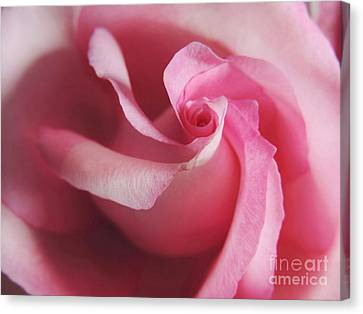 Spiral Rose Canvas Print by Kristine Merc