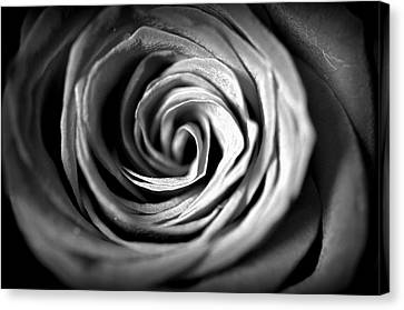 Spiraling Rose Canvas Print