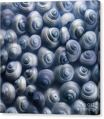 Spirals Blue Canvas Print by Priska Wettstein