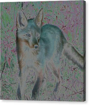 Spirit Fox Canvas Print by Aurora Levins Morales