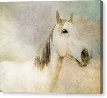 Spirit Horse Canvas Print by Terry Fleckney