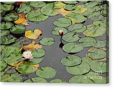 Canvas Print featuring the photograph Spirit Lake Lillies by Sam Rosen