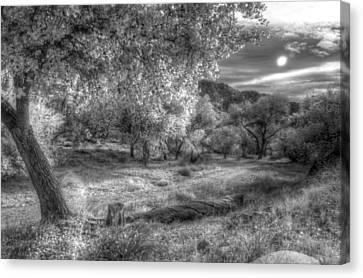 Spirit Tree Canvas Print