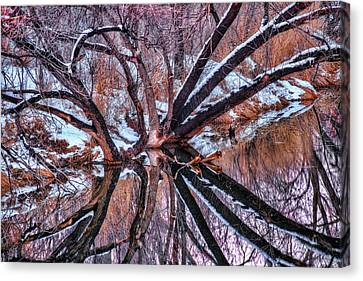 Spittin' Images Canvas Print by Tom Weisbrook