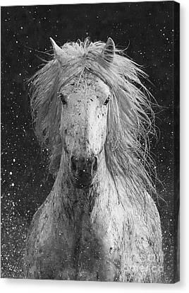 Black And White Horse Canvas Print - Splash by Carol Walker
