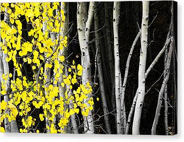 Splash Of Gold Canvas Print by The Forests Edge Photography - Diane Sandoval