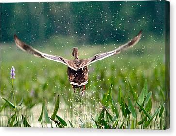 Splashy Take-off Canvas Print by Shell Ette
