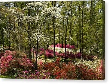 Splendor - Azalea Garden Canvas Print