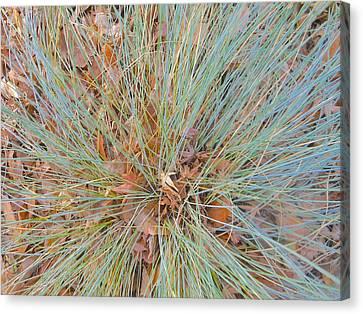 Splendor In The Grass Canvas Print