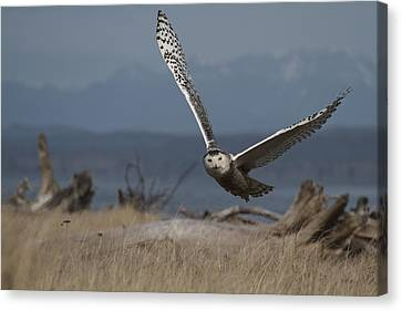 Splendor Of Flight Canvas Print