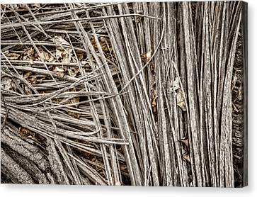 Splinters Canvas Print by Scott Norris