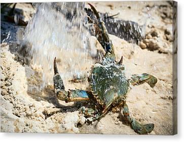 Splish Splash Canvas Print by Sennie Pierson
