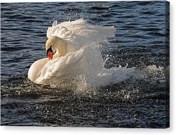 Splish Splash Taking A Bath Canvas Print by Jlt Photography