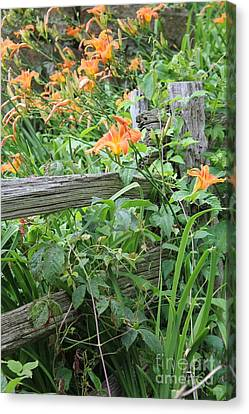 Canvas Print featuring the photograph Split Rail Fence by Laurinda Bowling