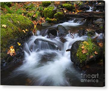 Splitting The Forest Canvas Print by Mike Dawson