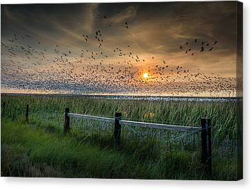 Spooked Geese Canvas Print by Allen Biedrzycki