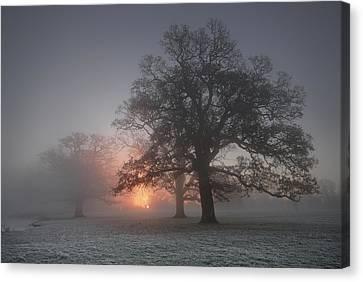 Spooky Misty Morning  Canvas Print