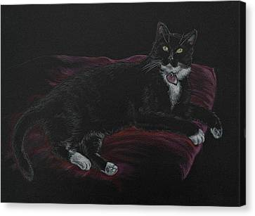 Spooky The Cat Canvas Print by Michele Myers