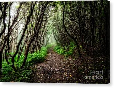 Spooky Trail Canvas Print by Deborah Scannell