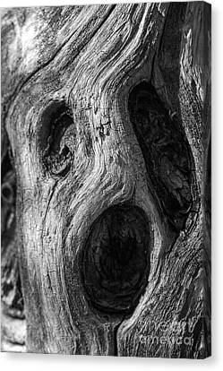 Canvas Print featuring the photograph Spooky Tree by Mitch Shindelbower