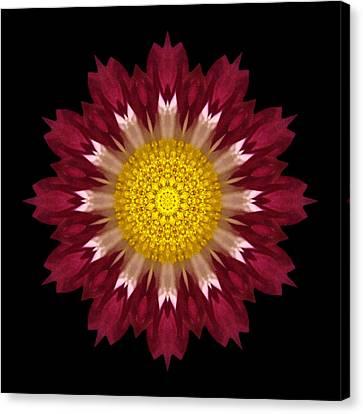 Spoon Chrysanthemum I Flower Mandala Canvas Print by David J Bookbinder