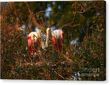 Canvas Print featuring the photograph Spoonbill Love Nest by John F Tsumas
