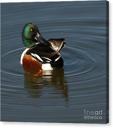Canvas Print featuring the photograph Spooney by Bob and Jan Shriner