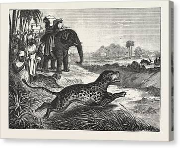 Sport In India, Hunting Antelopes With The Cheetah Canvas Print by English School