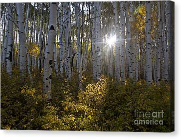 Spot Of Sun Canvas Print by Jeffrey Kolker