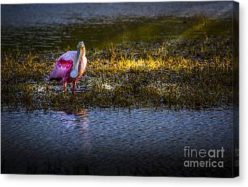 Sea Birds Canvas Print - Spotlight by Marvin Spates