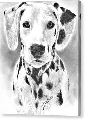 Spots Everywhere Canvas Print by Janet Moss