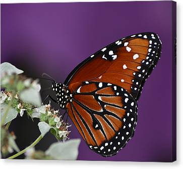 Spotted Beauty Canvas Print