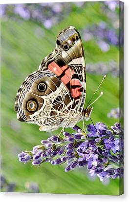 Garden Canvas Print - Spotted Butterfly by Kim Bemis