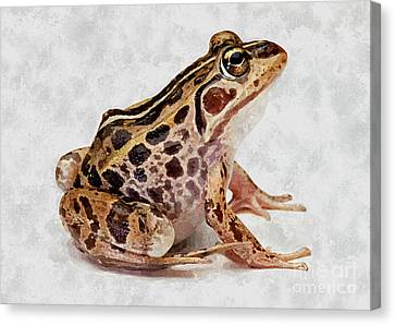 Spring Peepers Canvas Print - Spotted Dart Frog by Lanjee Chee