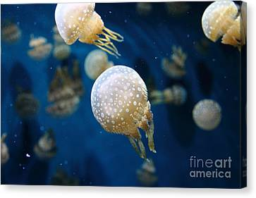Spotted Jelly Fish 5d24949 Canvas Print by Wingsdomain Art and Photography