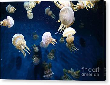 Spotted Jelly Fish 5d24951 Canvas Print by Wingsdomain Art and Photography