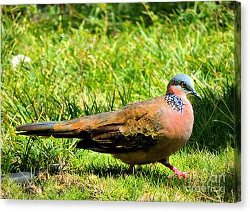 Canvas Print featuring the photograph Spotted Nape Dove by Kristine Merc