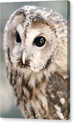 Canvas Print featuring the photograph Spotted Owl by Shoal Hollingsworth