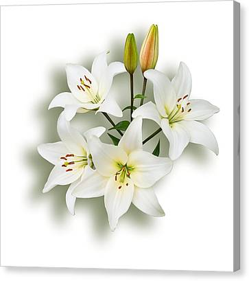 Spray Of White Lilies Canvas Print by Jane McIlroy