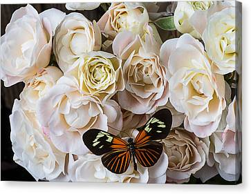 Spray Roses Canvas Print by Garry Gay